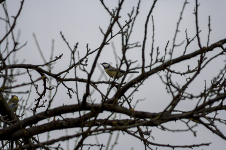 titmouse sitting on a tree branch