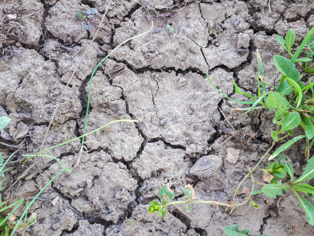 dry land and green plant