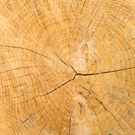 macro rings on a cut oak background