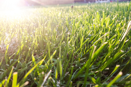 green grass. The suns rays in the background 写真素材