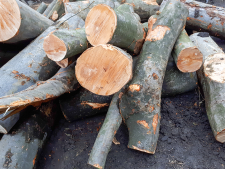 cut nature tree logs Zdjęcie Seryjne