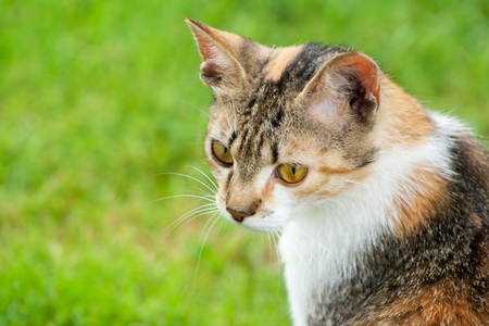 Head of a young cat on a green grass background