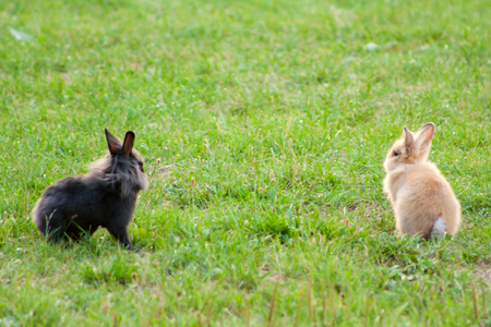 Two purebred rabbits eating grass in a meadow Banque d'images