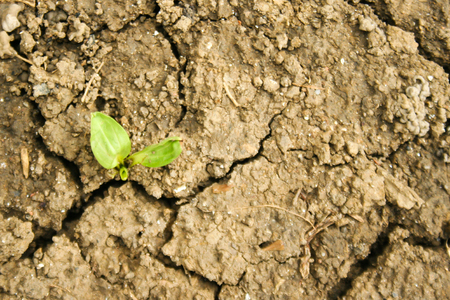Young plant growing in arid soil. Power or success concept