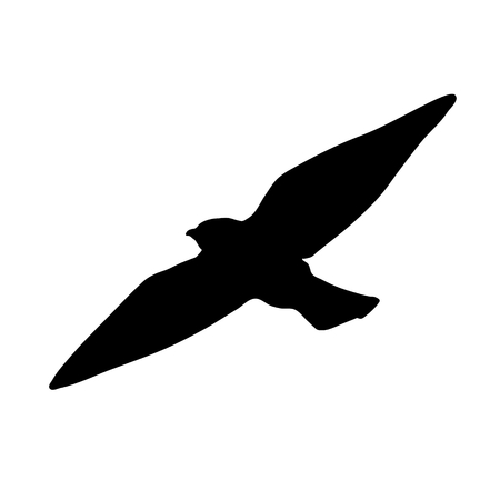 bird icon on white background. Bird vector