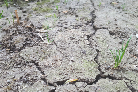 drought, cracked earth in gray. earth without rain. background Zdjęcie Seryjne