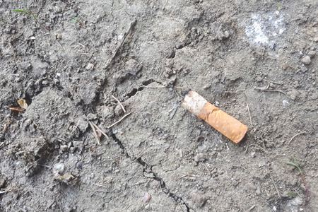 Stub lying on the ground of a park. Close up of a cigarette end left on the ground surrounded by small plants Imagens