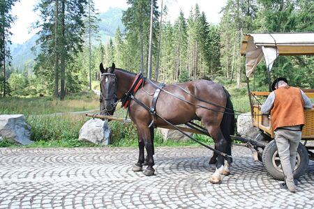 Horses and coachman are waiting for tourists at Morskie Oko in Poland. Pine trees and mountains in the background.