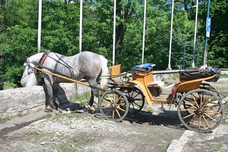 The gray horse in full harness eats hay from the bag. Horse carriage wait for tourist in Zakopane.