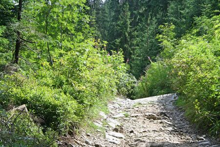 A narrow road made of stones in the Tatra Mountains. There are lots of greenery around.
