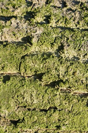 Green Tree Bark Texture Backgrounds with vertical