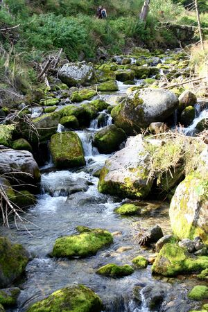 A beautiful high mountain stream
