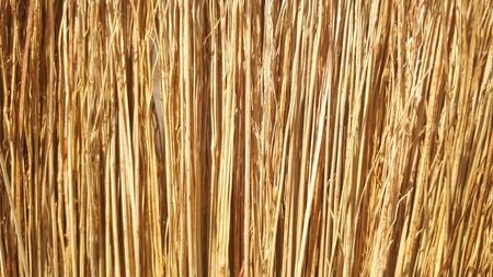 Broom texture, sorghum stems closeup, texture background.