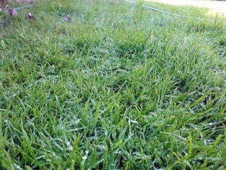 Water drops on the grass. Garden irrigation. Lawn irrigation.