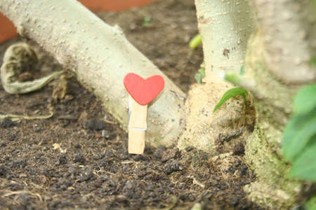 A clothes clip with a red heart located next to the roots of a tree. Archivio Fotografico