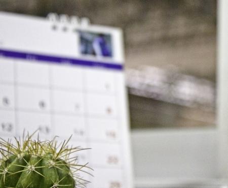 Cactus thai photo
