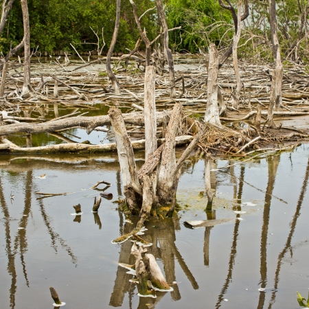 Conservation of mangroves Stock Photo - 14841722