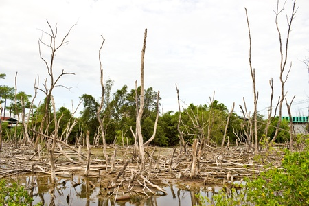 Conservation of mangroves Stock Photo - 14845135