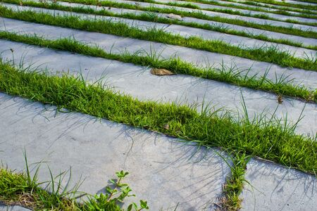 Pavement with grass  photo