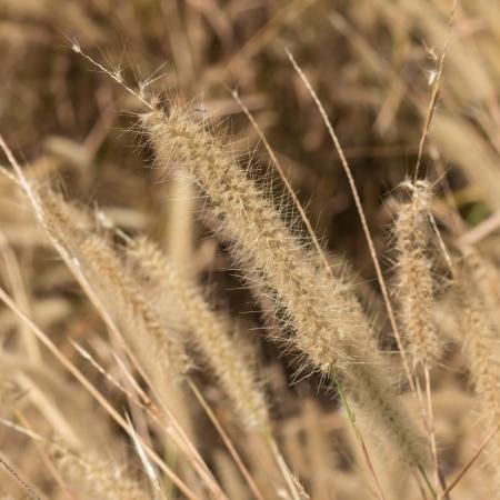 pampas: Background of pampas grass