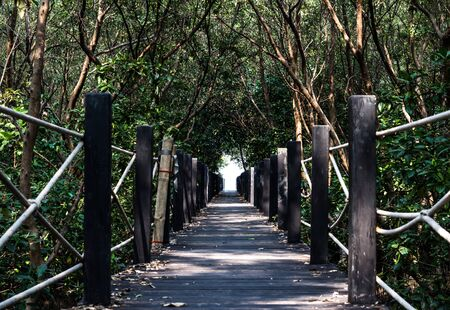Wooden Bridge In Mangrove Forest photo
