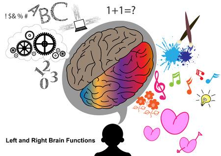 talamo: Cerebro izquierdo y derecho ilustraci?n de la funci?n Vectores