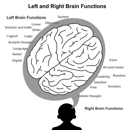 brain function: Left and Right brain function illustration