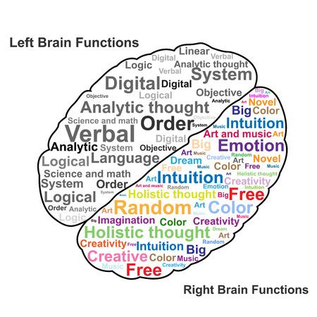 Cerebro izquierdo y derecho ilustraci?n de la funci?n Foto de archivo - 22197174