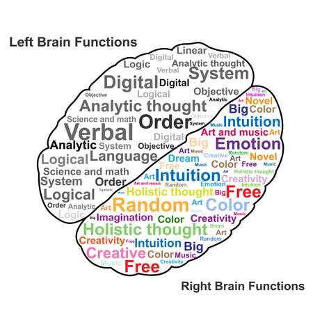 Left and Right brain function illustration Imagens - 22197174