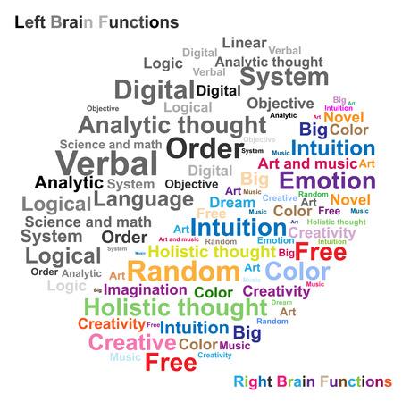 central: Cerebro izquierdo y derecho ilustraci?n de la funci?n Vectores