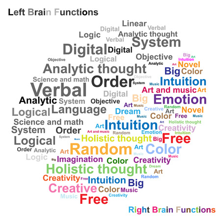 Left and Right brain function illustration Vector
