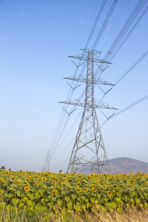 High-voltage support of a power line in the field of sunflowers photo