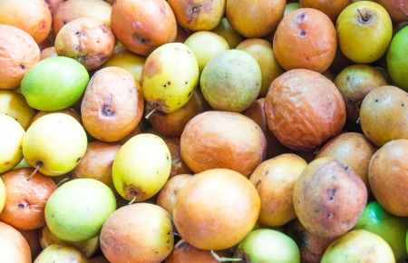 Ziziphus mauritiana, also known as Ber, Chinee Apple, Jujube, Indian plum and Masau is a tropical fruit tree species photo