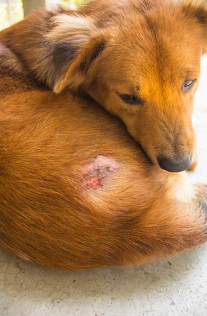 injure: Injured after fight with other dog