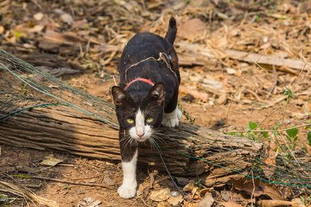 attacking: atacar gato
