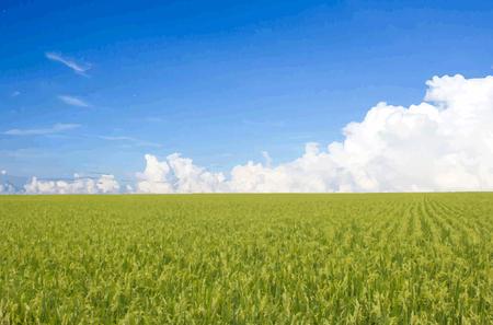 Beau paysage Vector Banque d'images - 28489448