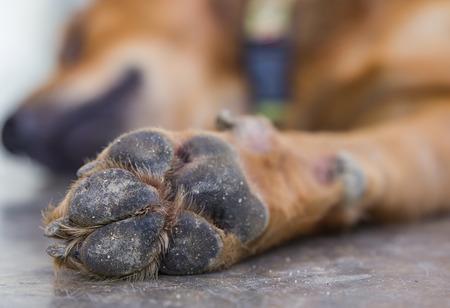 dog feet and legs