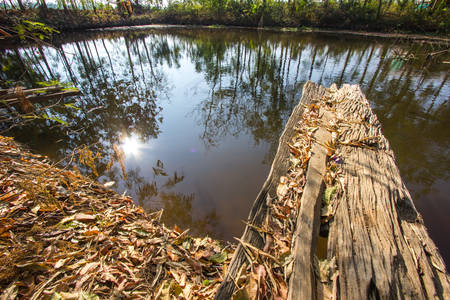 Jetty pond in the woods photo