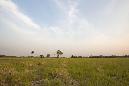 champ de mais: aride champ de ma�s Banque d'images