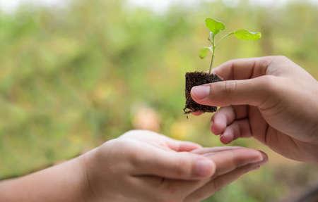 arbol de problemas: Árbol joven en la mano como de la señora