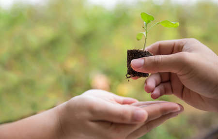 forestation: Sapling in hand as of lady