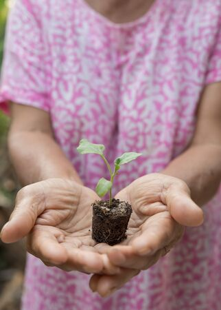 ecological problem: Sapling in hand as of lady old people