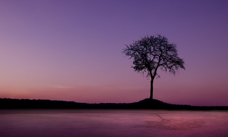 toter baum: Sunset and dead tree mountain