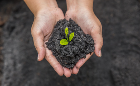 heap: Hands holding sapling in soil surface Stock Photo