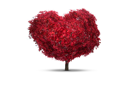 Tree heart isolated on a white background Stock Photo