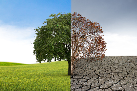 The concept of climate has changed. Half alive and half dead tree standing at the crossroads. Save the environment.