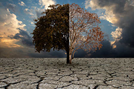 The concept of climate has changed. tree standing at the crossroads. Save the environment. Stock Photo