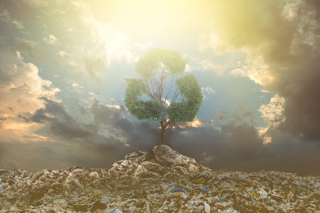Big alone tree in the garbage . Tree of life. Stock Photo