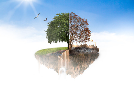 Island in the sky to the tree was burned to death in half and the other half are still alive luxuriant green foliage.