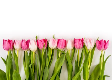 Frühling Frische bunte Tulpen isoliert auf weißem Hintergrund. Herzlichen Glückwunsch. Valentinstag, Frühling, Ostern. Platz für Text.